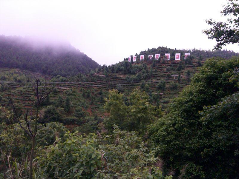 """图为""""油茶贷""""项目龙南县境内种植基地."""